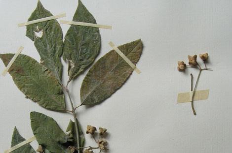 projet-herbier